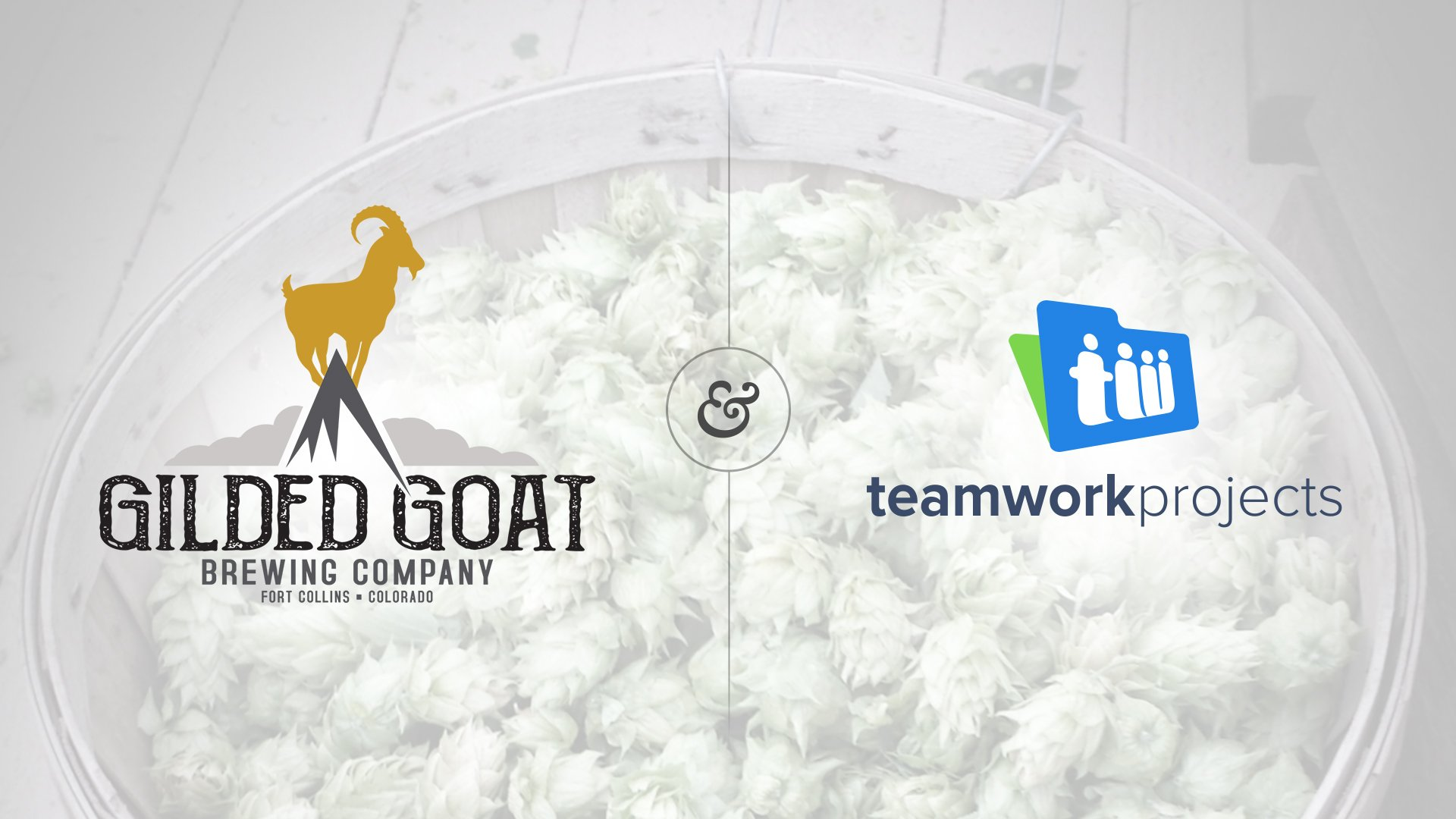 How Gilded Goat Brewing Company uses Teamwork Projects | Teamwork.com High Performance Blog